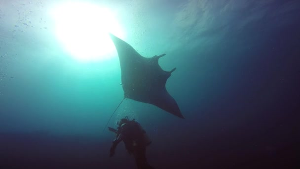 Amazing diving with the big manta rays off Socorro island in the Pacific ocean. Mexico.