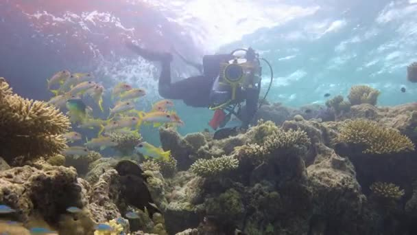 Underwater videographer, shooting a flock of red mullet fishes.