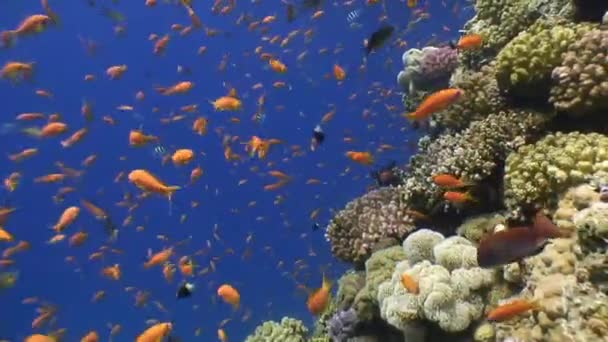 Picturesque colorful coral reef with tons of tropical fish.