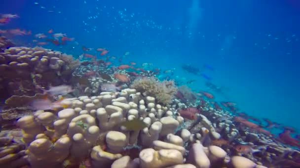 Vzrušující potápění z mafiánského ostrova. Tanzanie. Afrika.