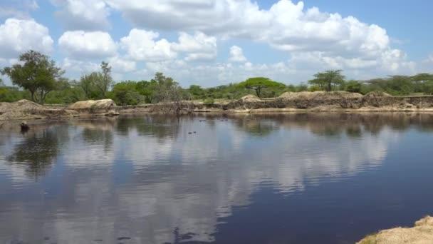 Flusspferde. Eine aufregende Safari durch den Selous-Nationalpark. Tansania. Afrika.