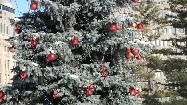 Vyzdobený vánoční strom v parku cityt
