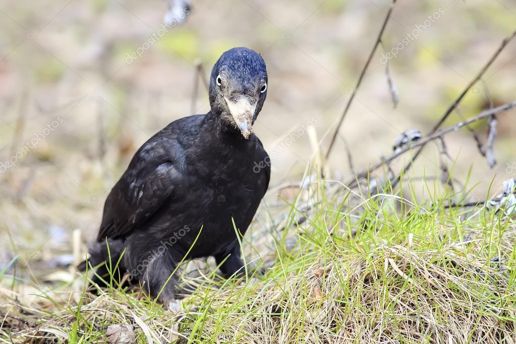 Μεγάλο πουλί έκπληξη