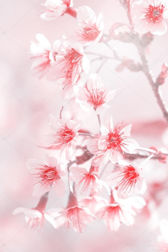 Fiore Rosa Sfocato Per Sfondo Verticale Foto Stock Karnstocks