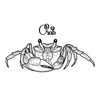 Graphic vector crab