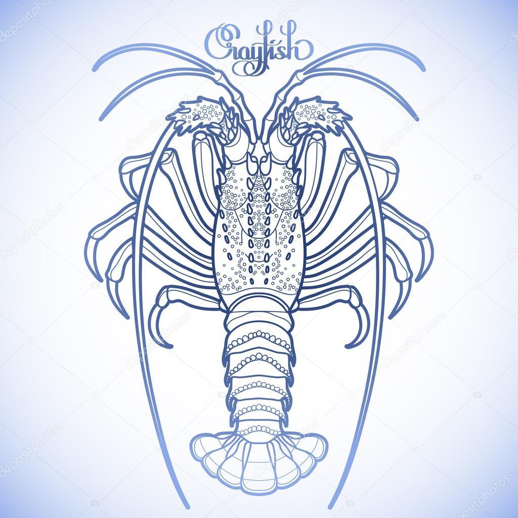Graphic vector crayfish