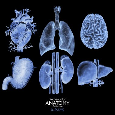 Watercolor X-rays of organs