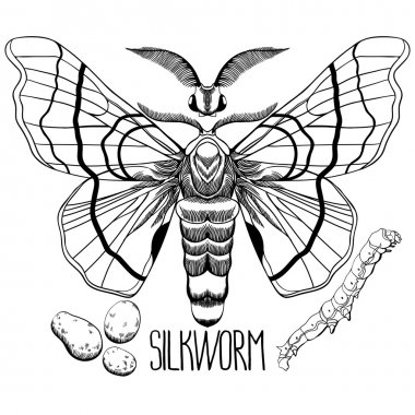 Graphic silkworm set