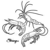 Graphic  shrimps collection