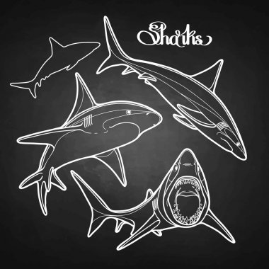 Graphic collection of sharks