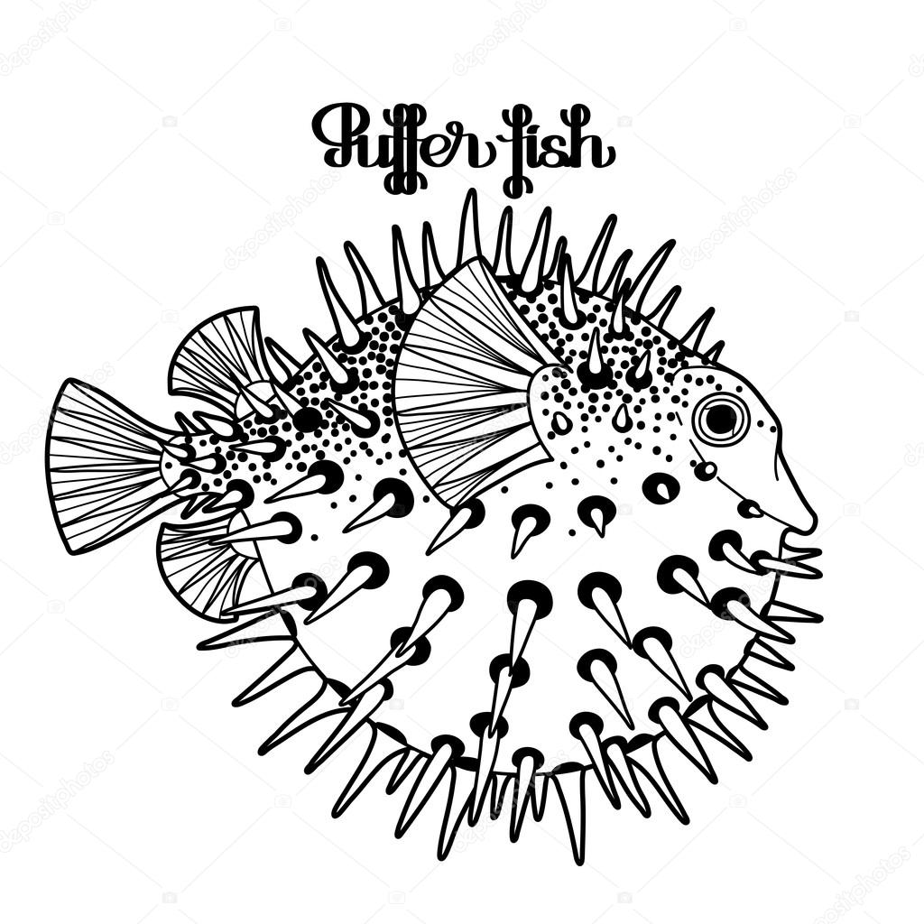 Graphic puffer fish — Stock Vector © homunkulus28 #106298382