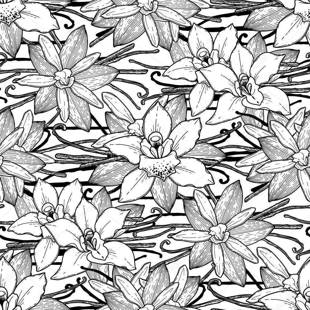 Motif Graphique De Vanille Image Vectorielle Homunkulus28