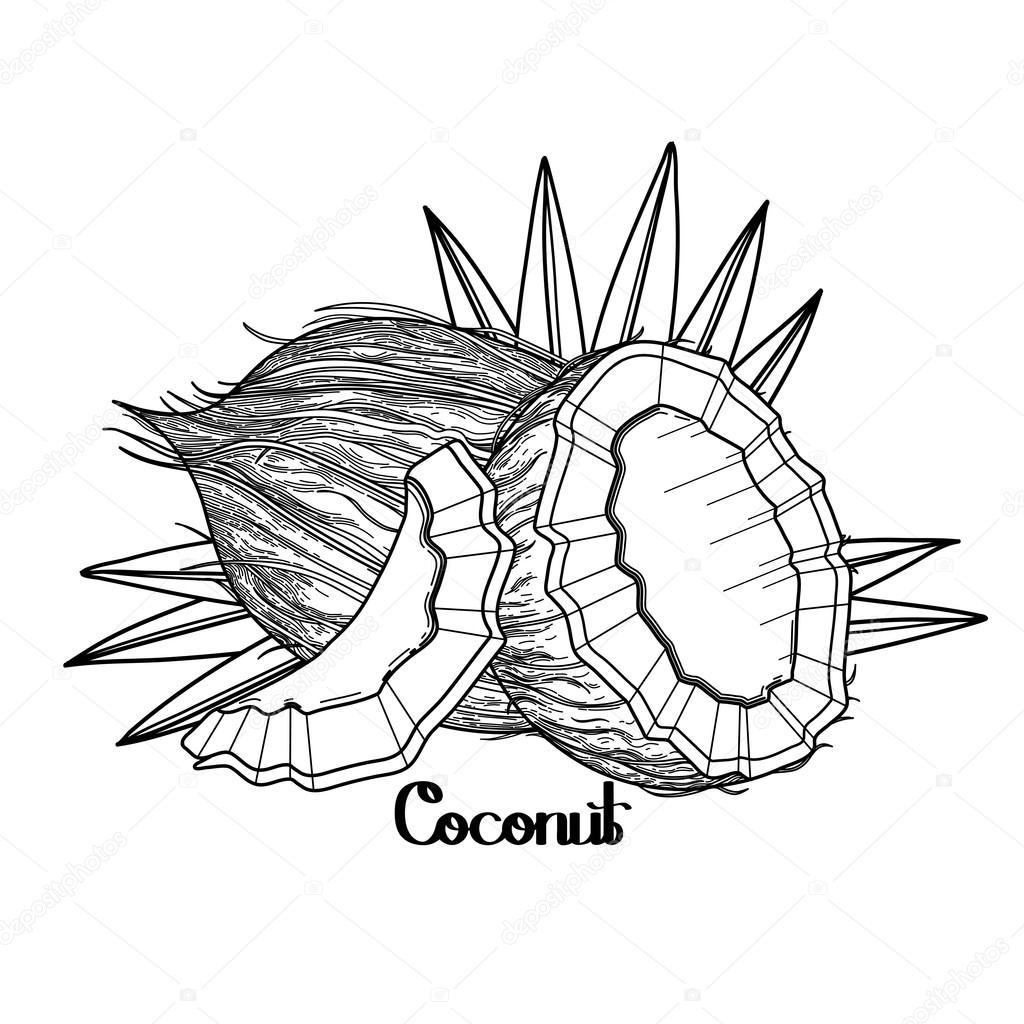 Conception Graphique De Noix De Coco Image Vectorielle
