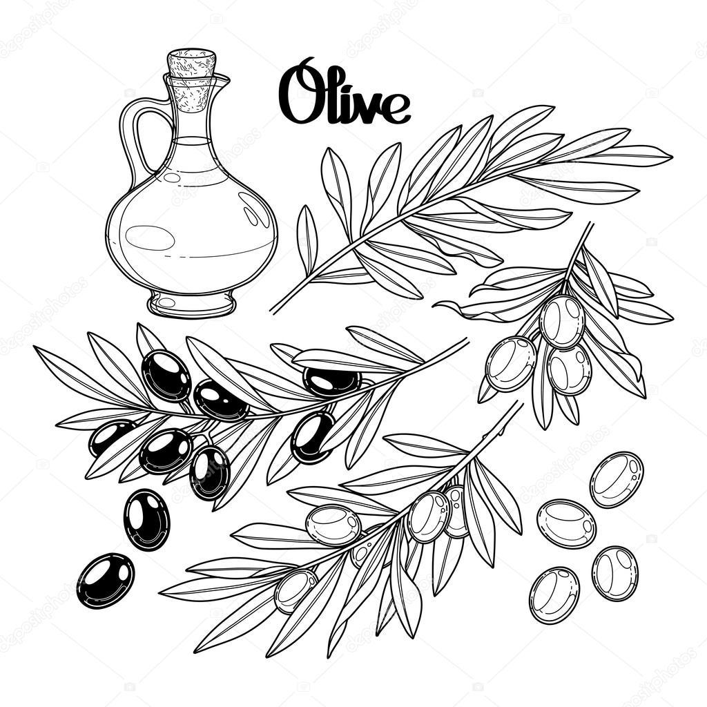 Dibujos: olivos para niños | Colección gráfica olivos — Vector de