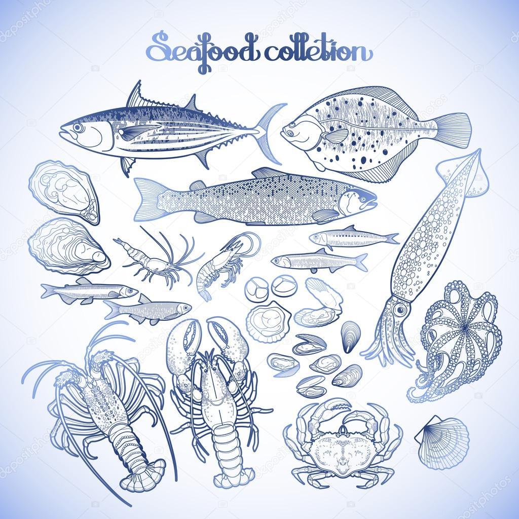 Grafik Deniz ürünleri Koleksiyonu Stok Vektör Homunkulus28