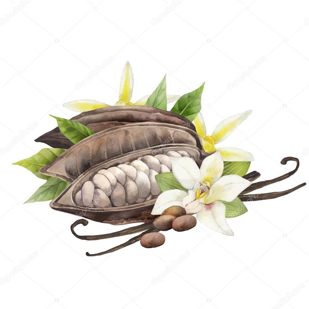 Цветок какао
