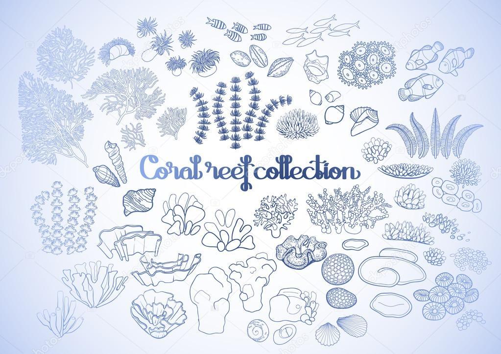 Colección de elementos de arrecife de coral — Archivo Imágenes ...