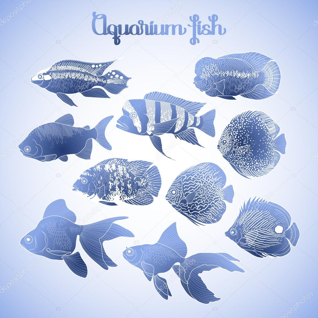 Graphic aquarium fish