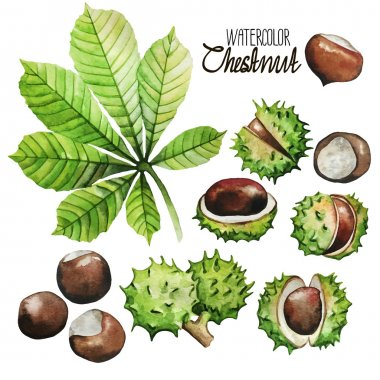 Watercolor chestnut collection