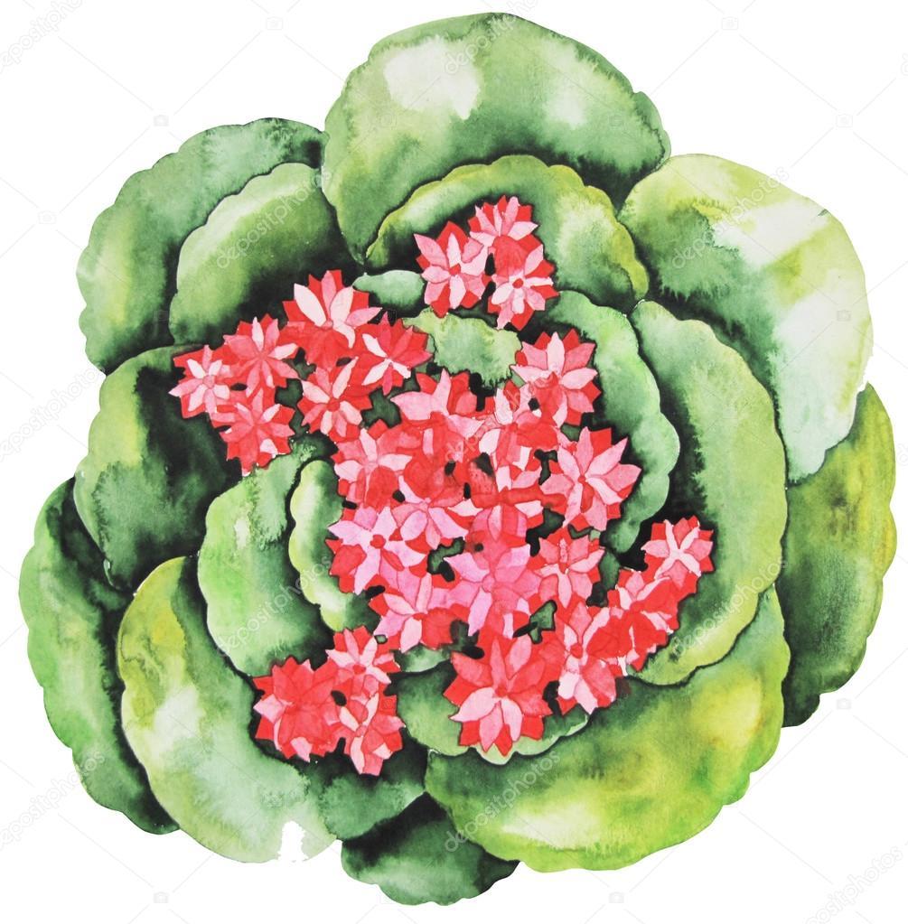 Watercolor cute succulent