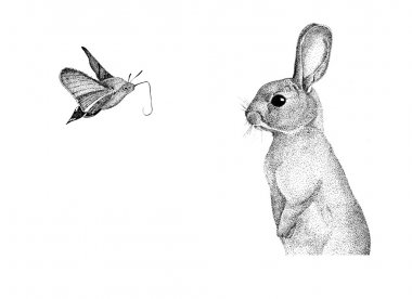graphics handmade rabbit, hare pointillism, watercolor, little moth