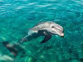 Fotografie Dolphin smiles like Mona Lisa
