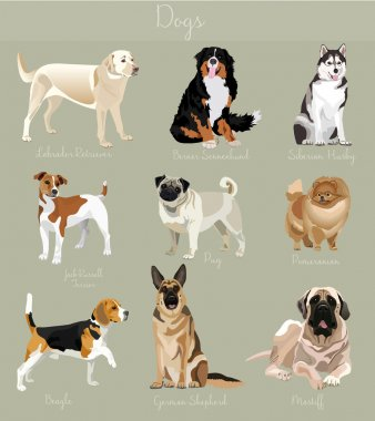 Different type of dogs set isolated. Big and small animals.