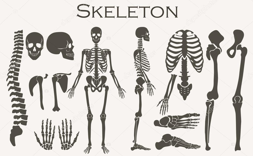 Colección de silueta de esqueleto huesos humanos establece. Alta ...