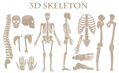 Human bones 3d realistic vector skeleton silhouette collection set. High detailed helloween illustration.