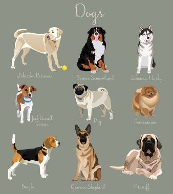 Different type of dogs set isolated. Big and small animals