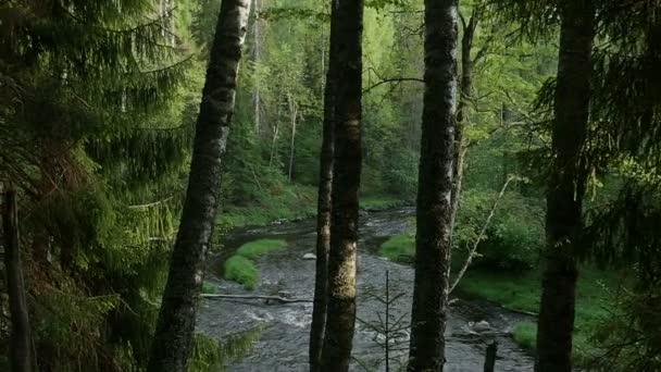 Pohyb kamery v lese, mezi kmeny stromů