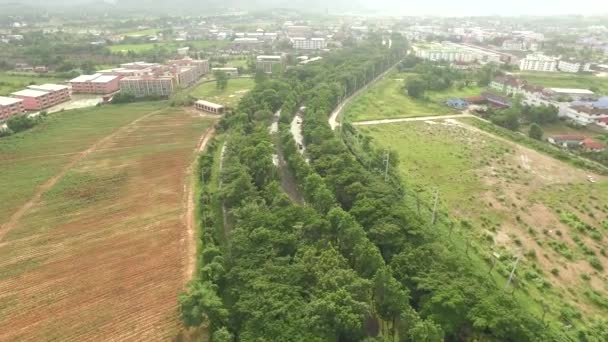 Aerial shot of the green tree road