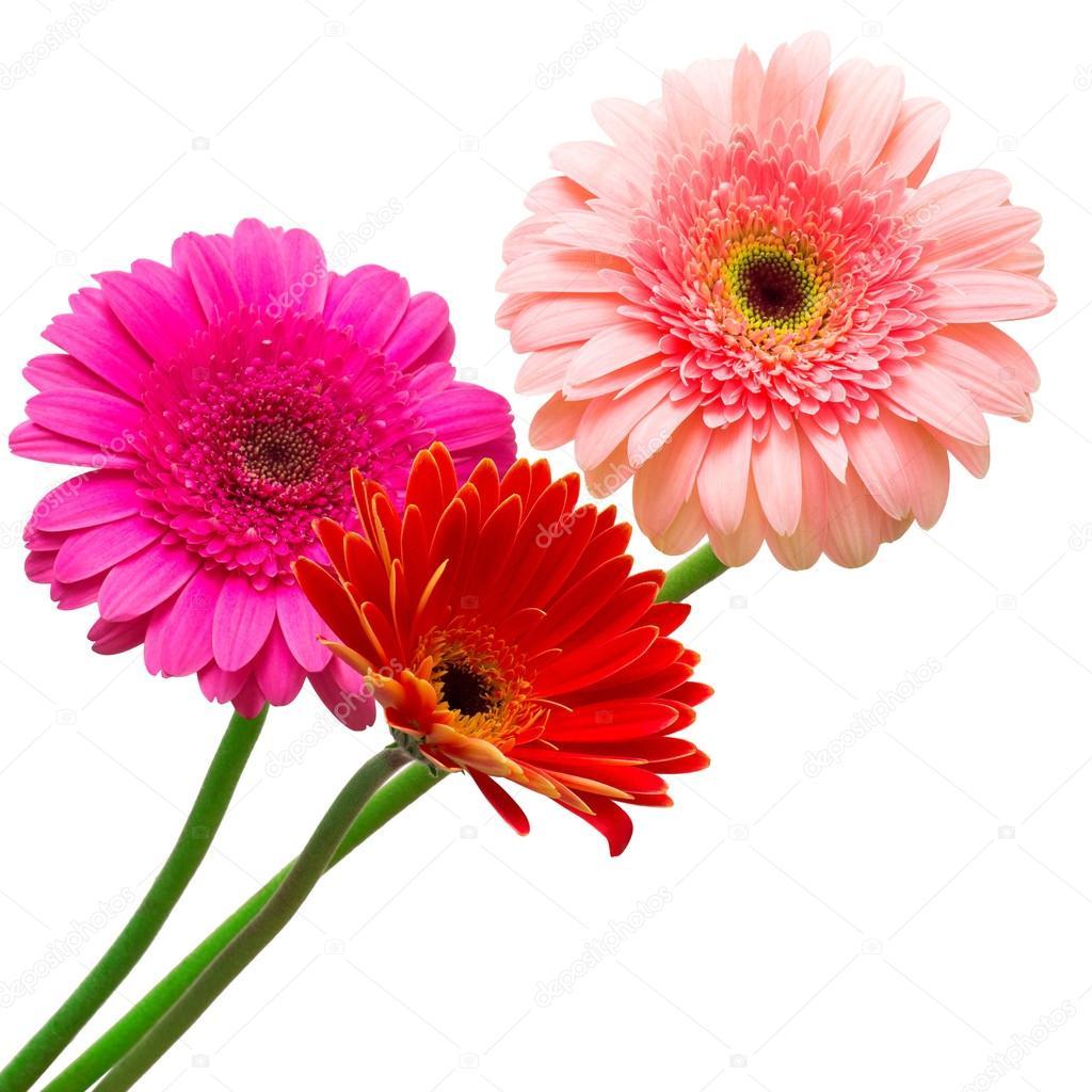 Bouquet Of Gerberas Flowers Stock Photo C Flowerstudio 102740368