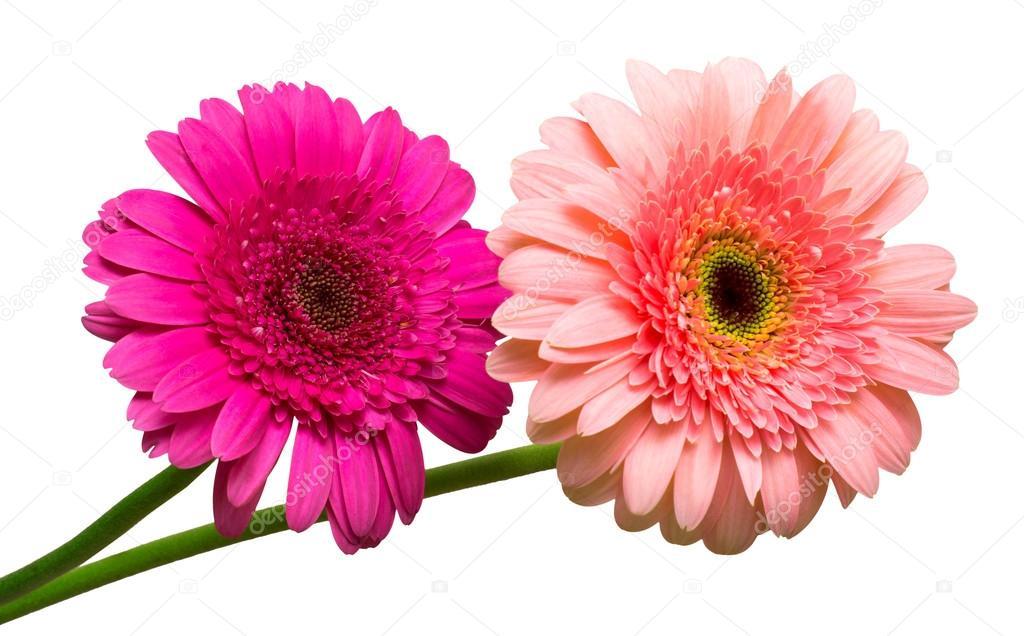 Buque De Flores De Gerberas Fotografias De Stock C Flowerstudio