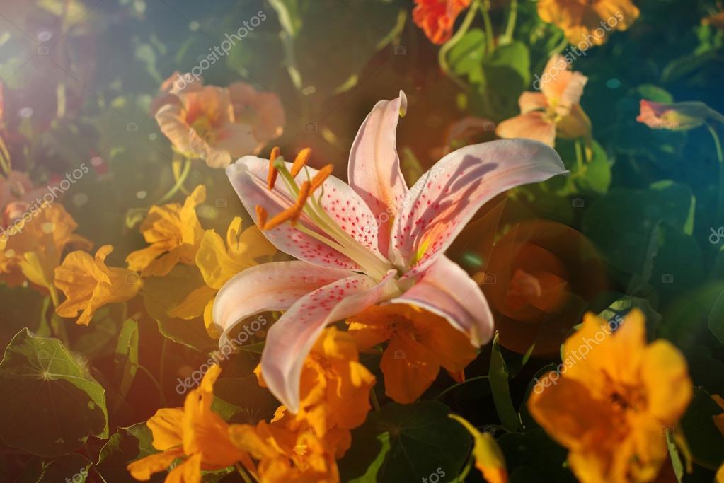 Beautiful pink vintage flower