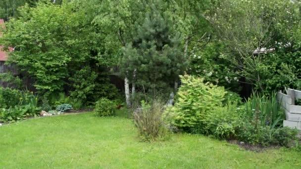 Malá zahrada na letní den
