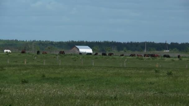 stádo koní na farmě