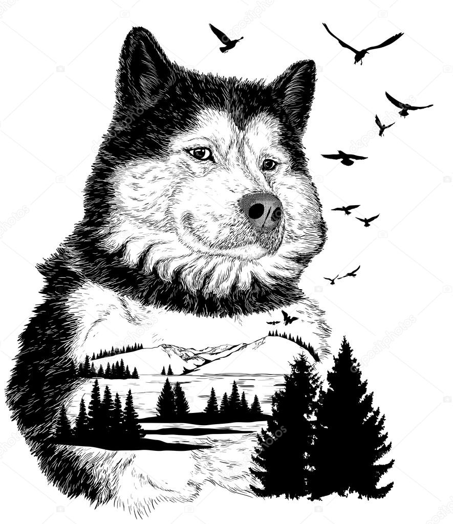 vector hand drawn wolf for your design stock vector