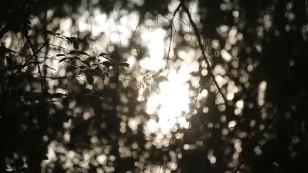 Sluneční paprsky listoví lesů dříví v parku, letní přírody pohled na slunci, pozadí