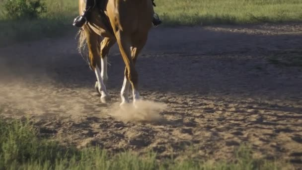 close-up of the horses hooves. Running horse makes dust
