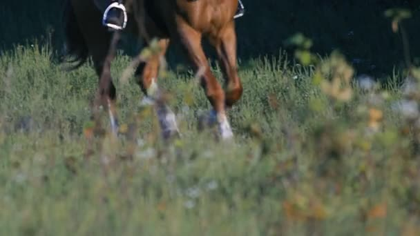Beine des galoppierenden Pferdes, als es sich in Zeitlupe nähert.