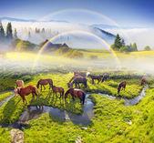 Koně pasoucí se v pastvinách