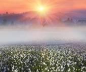 Fényképek vad nárcisz virág-hegység