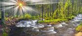 divoký lesní potok