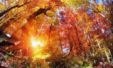 magic Autumn forest
