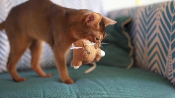 Niedliche Abessinische Katze spielt mit einer Maus und einem Stück Papier.