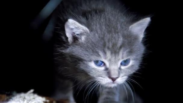 little kittens on walk