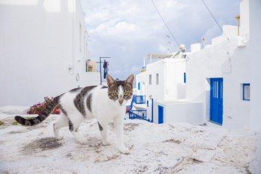 Cat on the street of Mykonos, Greece