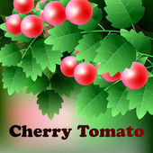 Ripe, red, juicy cherry tomato hang on a green branch. Vector