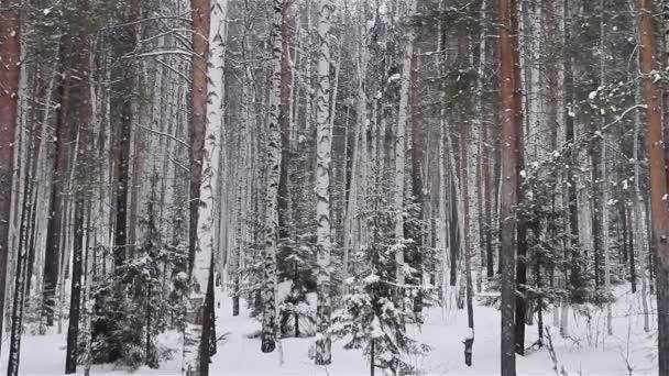 Winterwald, Kiefer, Birke